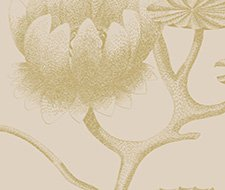 95/4019.CS Lily – Linen/Gold – Cole & Son Wallpaper