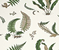 BW45044.1 Ferns – Original Green – 1 – G P & J Baker Wallpaper