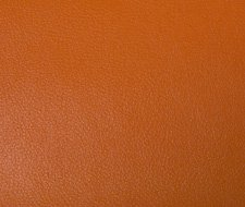 NEWT.12 Newt – 12 – Kravet Smart Faux Leather